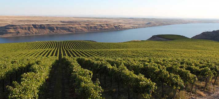 Wallula Vineyard in the Columbia River Valley